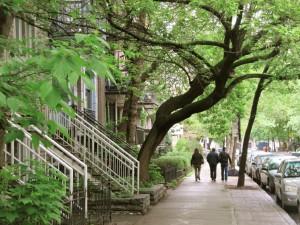 les_rues_de_Montreal-08-les_arbres_dans_les_frontages.003