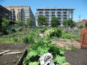 les_rues_de_Montreal-22-jardins_publics_et_populaires.004
